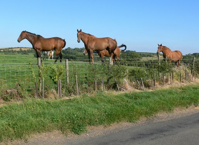 Horses next to Owston Road, Somerby