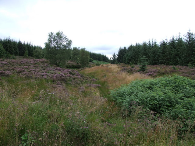 Deadwood Cleugh