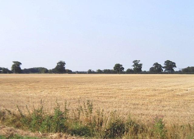 Farmland near Horseleycross Street