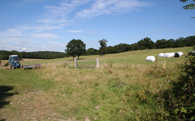 Hay Fields near Coneygore Coppice