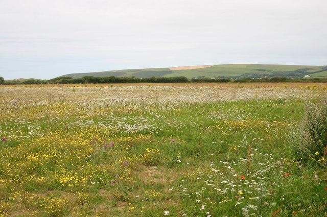 Wild flower meadow by Sandy Lane