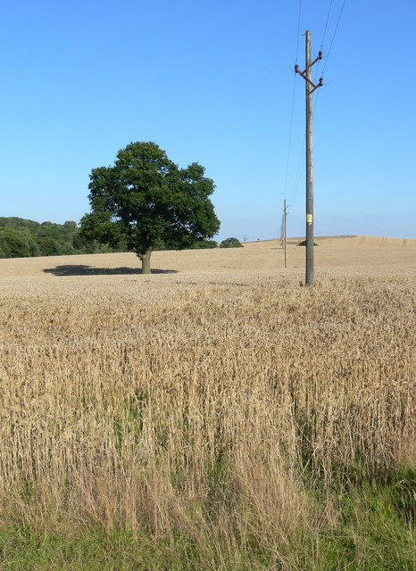 A view towards Owston Woods