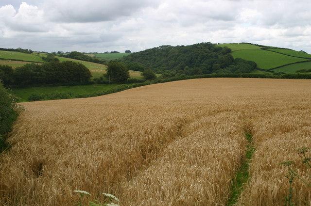 Fields looking towards Sloley Barton