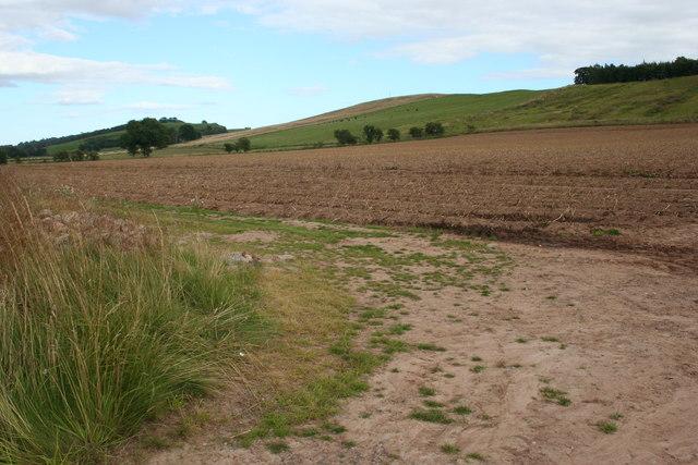 Tattie Field