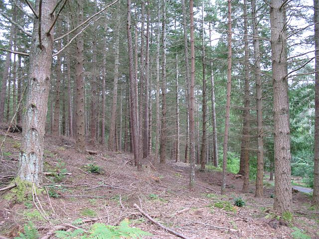Woodland, Dunmore Hill