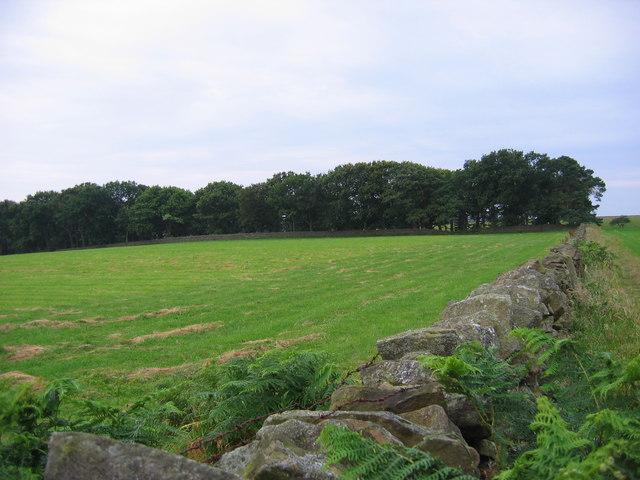 Linburn Hall Wood