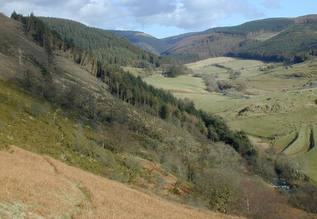 Forestry above the Afon  Mynach