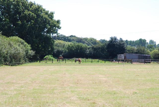 Horse paddock, Iron Acton