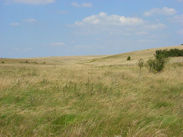 Downland, Larkhill Artillery Range
