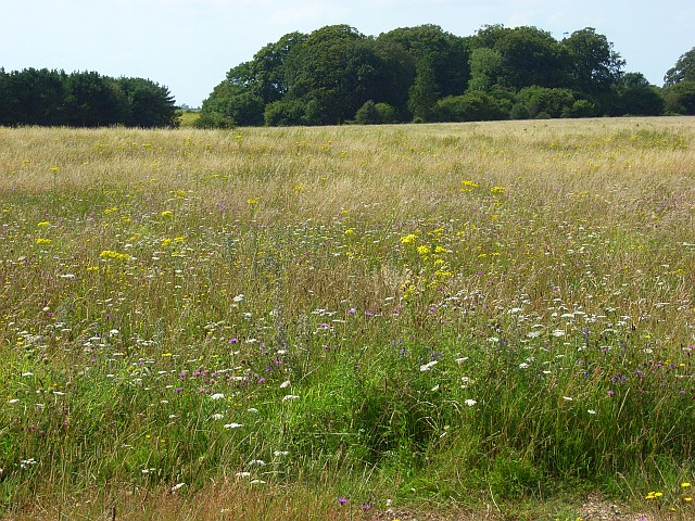 Grassland and copses, Shrewton