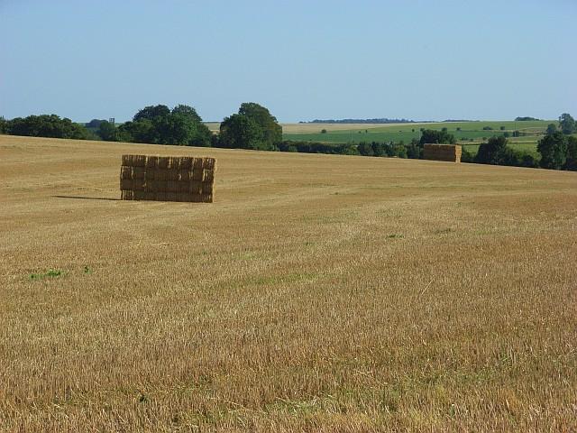 Farmland, Tilshead