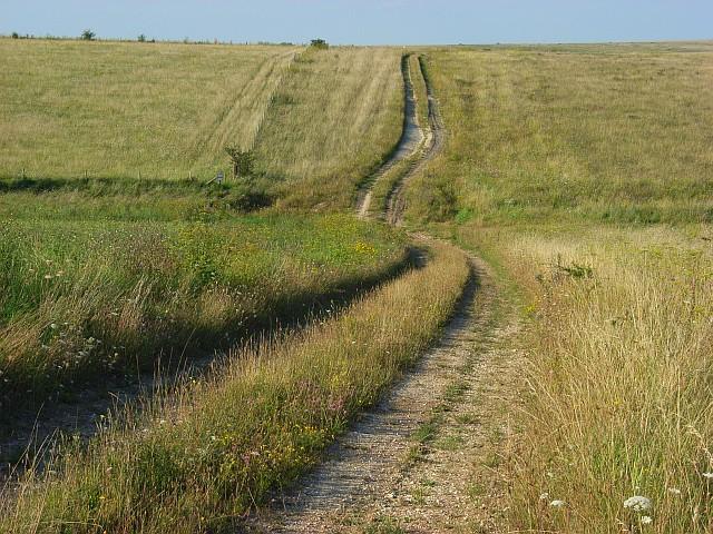 Downland track near Tilshead