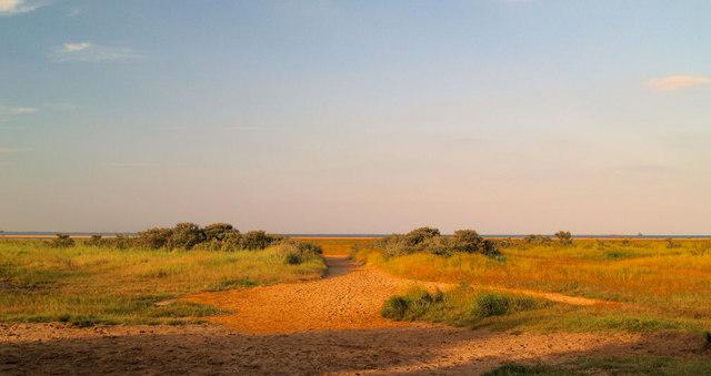 Late evening through the dunes.