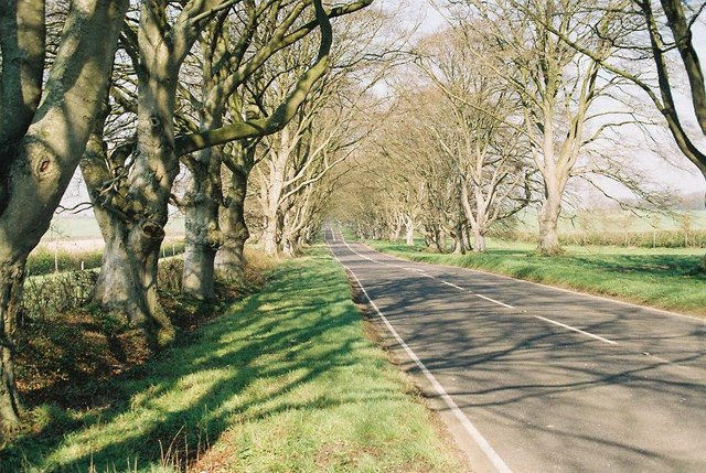 B3082: in the avenue of beeches