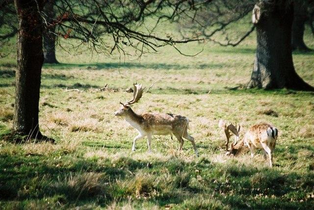 Antlers at Stock Gaylard