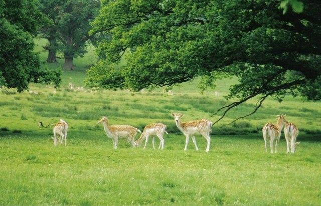 Stock Gaylard: deer park