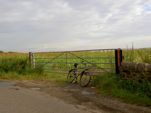 Gate into maize field.