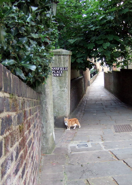 Hampstead alley cat