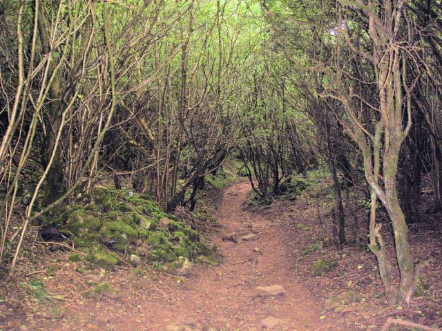 Wetton, footpath through dense woodland
