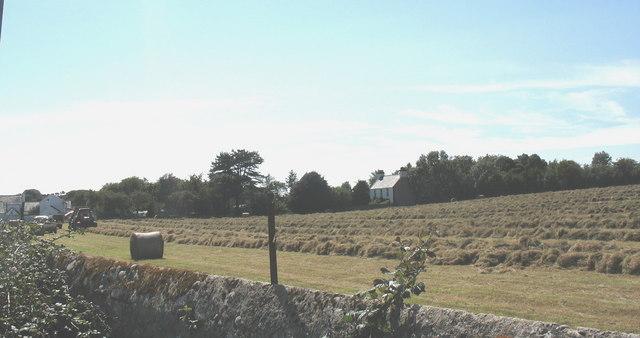 Haymaking at Tyddyn Bach
