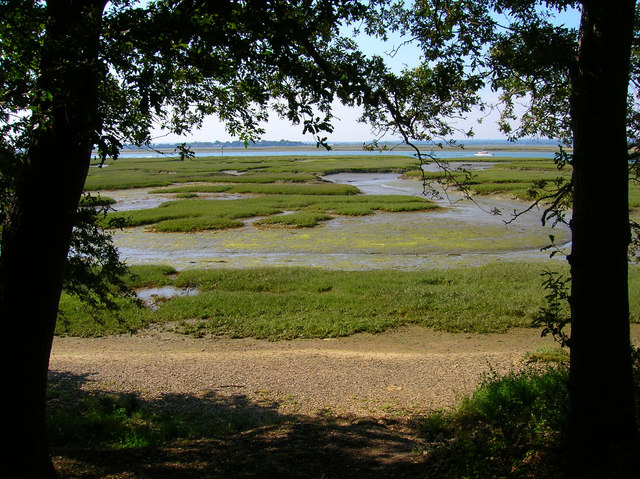 Saltmarsh from Birch Copse