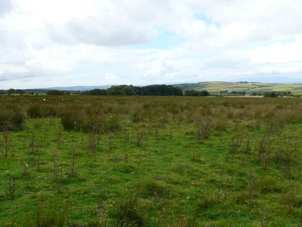 The Wood at Ravenscroft Farm