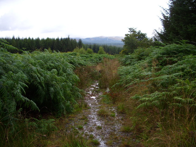 Forest Track in Glenrazie Wood