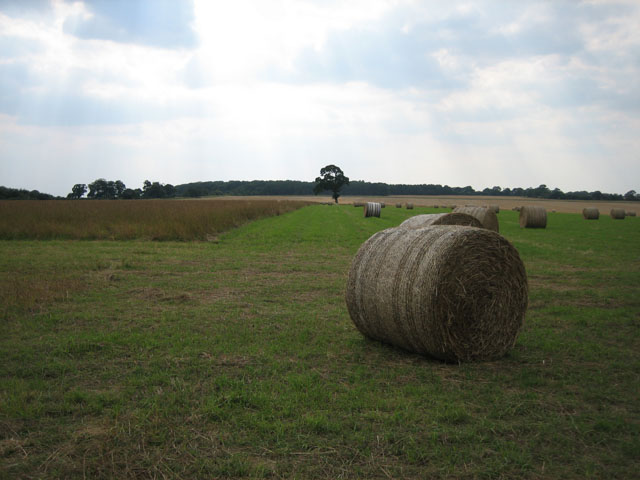 "Baled hay near ""Conservation Walk"""