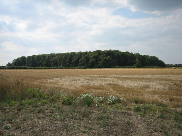 "Wood near ""The Mustard Pot"" on Gateley Hill"