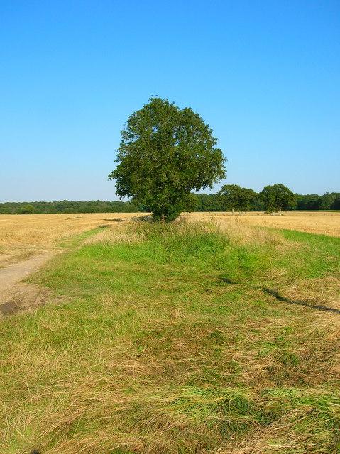 Field Boundary, Hoe Lane