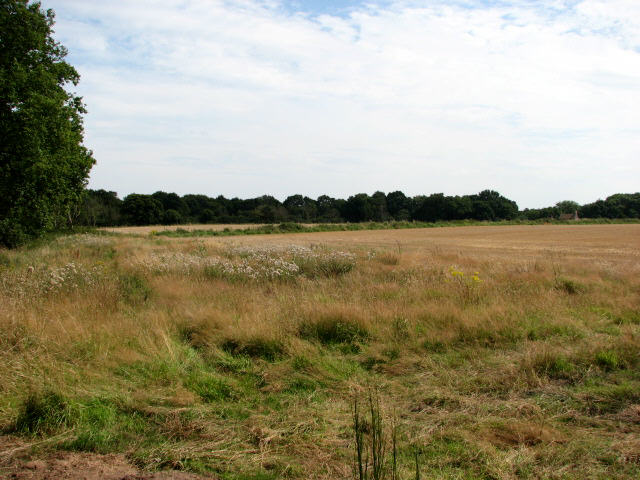 Crostwight Common