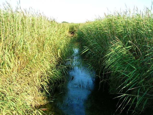 Stream through the Reedbeds