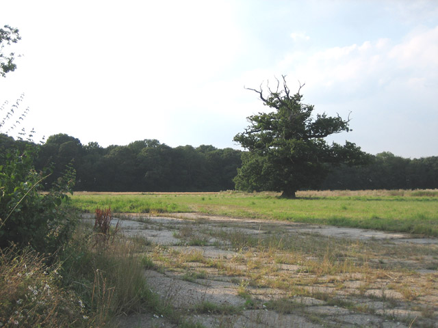 Long Belt, a wooded drive from Elmham House