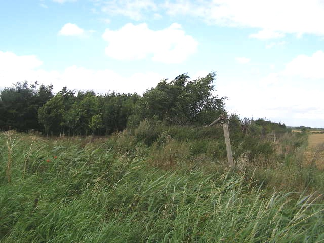 Plantation of young trees, Northorpe Fen