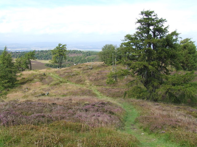 The top of Auchterhouse Hill