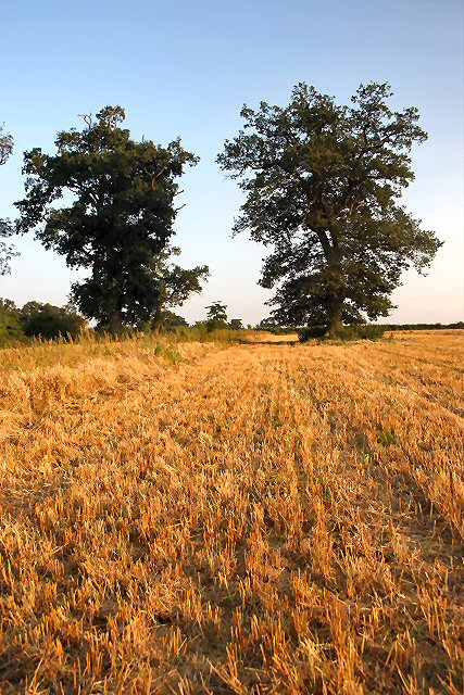 Stubble field, Little Saxham