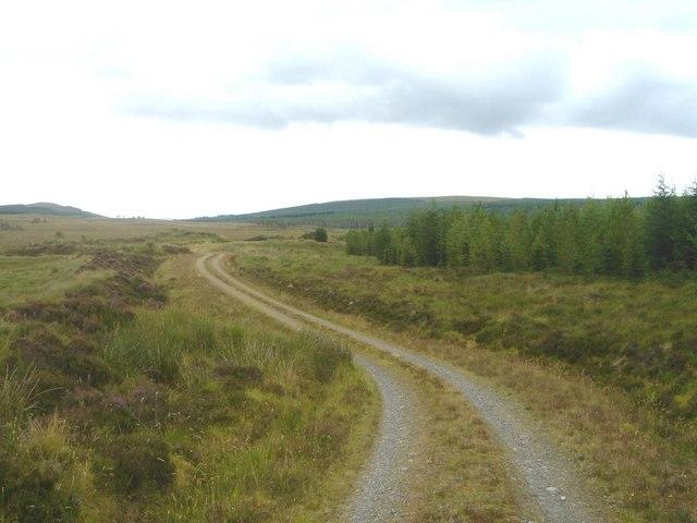 Forestry near the Allt Eileag