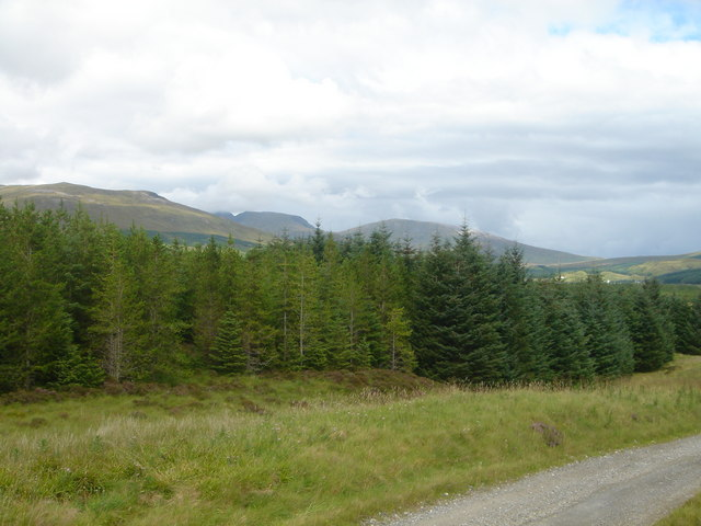 Ben More Forest