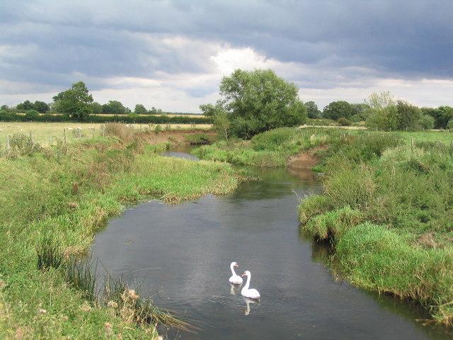Swans on the Wreake