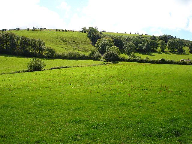 Pasture near Brynhyfryd