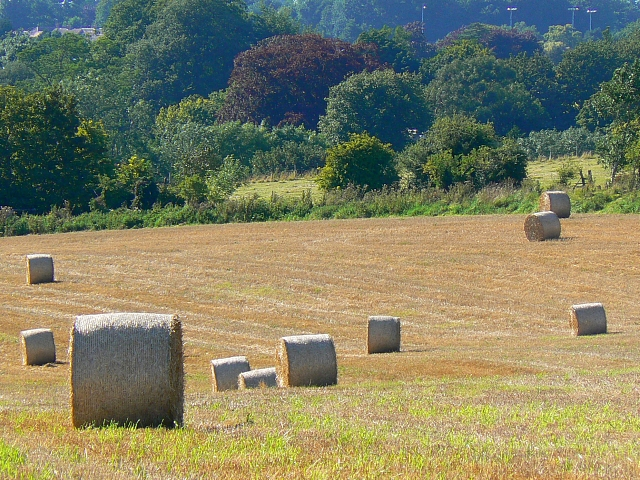 Straw bales, Monument Hill, south of Devizes