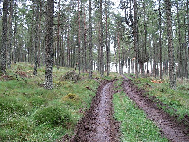 Cobairdy Wood