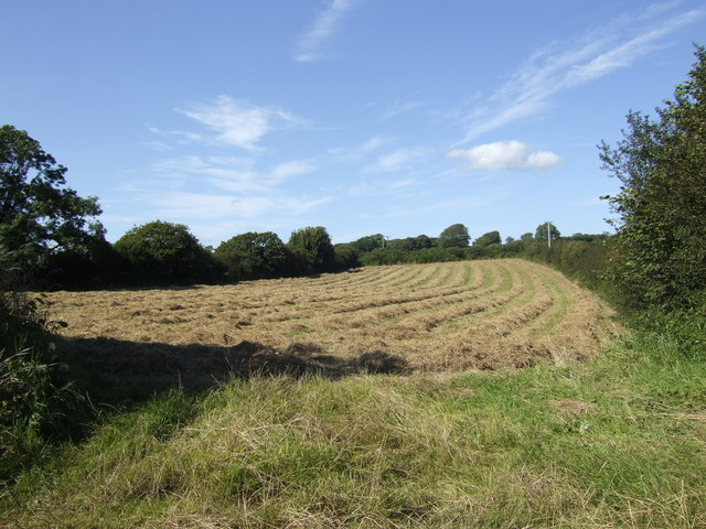 Hay meadow west of St. Florence