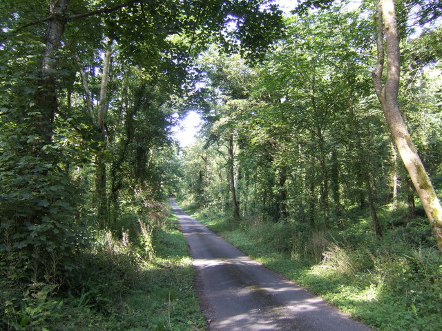 Lane near Martledge
