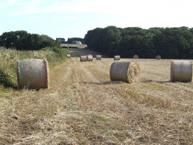 Straw harvest south of Lyserry