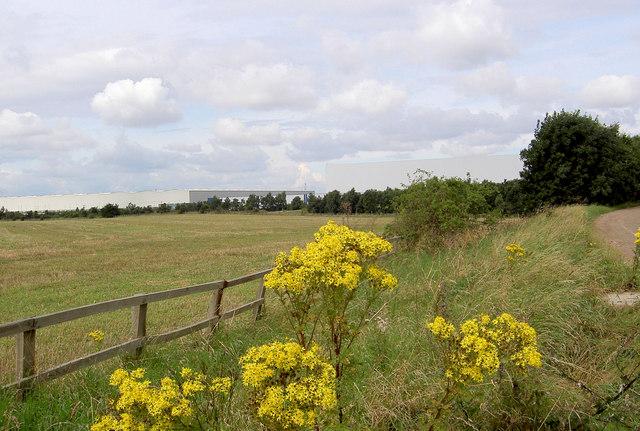 Roadside flora (weeds!).