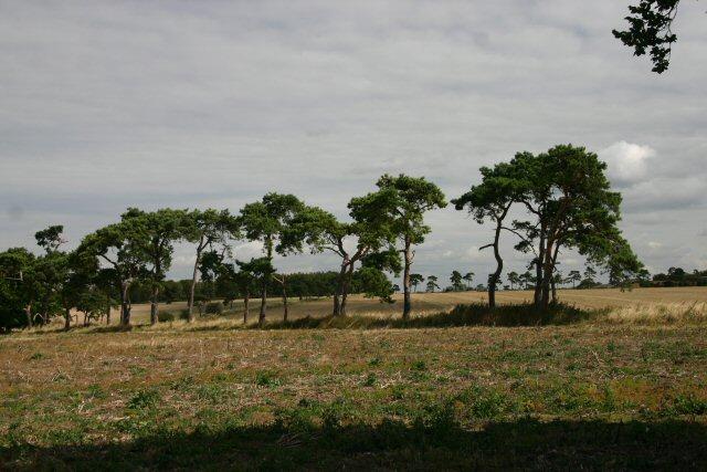 Tree line near Wilbraham chalk pits