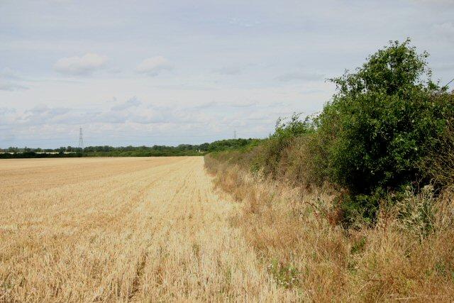 Hedgerow at Lower Heath Farm