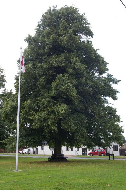 Flag-pole and tree