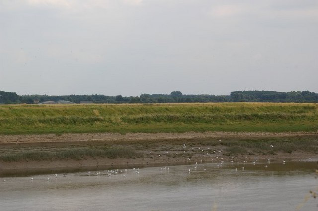 Birds on the River Great Ouse mudflats